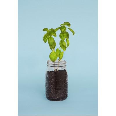 Boîte à Semences Bio Tomate & Basilic